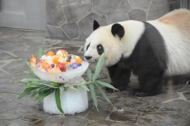 去年の誕生日会 (2017年 神戸市立王子動物園)