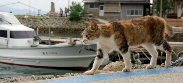 港を歩く猫の画像