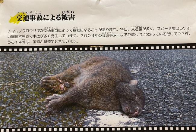 奄美野生生物保護センター展示資料