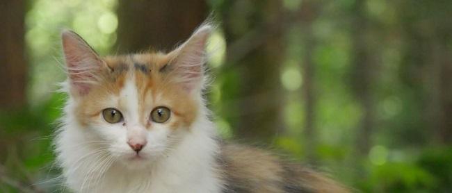 奄美の森に入れば害獣として駆除される罪なき猫を救いたい。