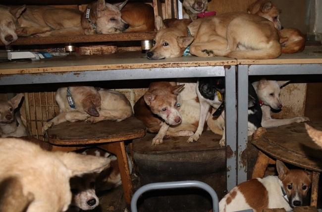 8畳二間に160匹以上の犬と人間が生活