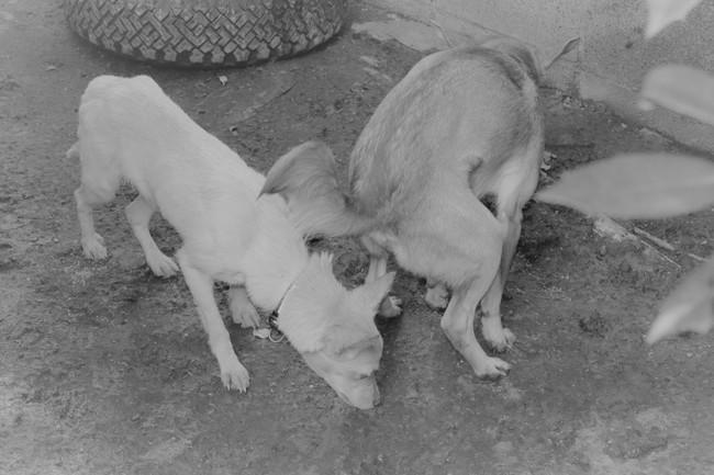 飢えて他の犬の糞尿を食べ生き延びてきた
