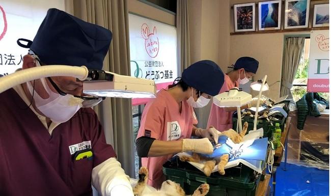3日で140頭以上の避妊去勢手術を行う獣医師チーム
