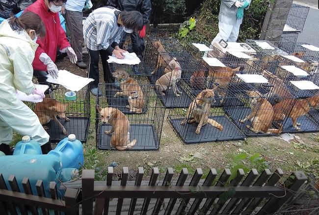 虐待現場から全ての犬が搬出された