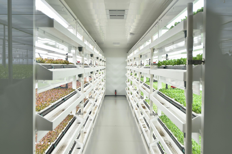 京東(ジンドン)集団【JD.com】と三菱ケミカル 中国最大級の「植物工場」が稼働開始 今後の展開へ向け戦略的パートナーシップ契約を締結