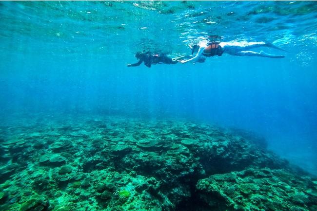 Hyatt Regency Seragaki Island Image of marine activities in Okinawa