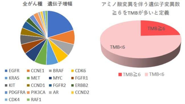 遺伝子増幅とTMB