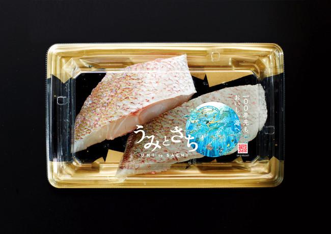 真鯛商品イメージ(切り身)