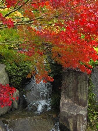 夜間ライトアップだけでなく、昼間の紅葉もおすすめ(豊島区立目白庭園)