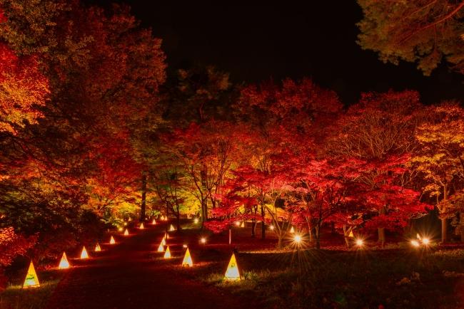 約20種・500本のカエデが美しく染まる「紅葉見ナイト」(国営武蔵丘陵森林公園)
