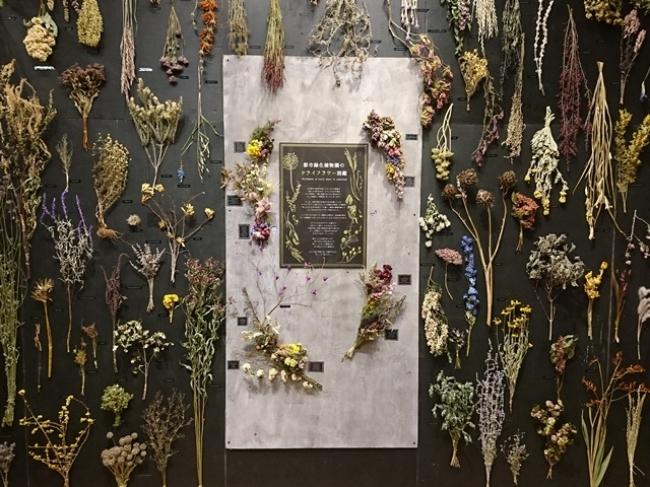 植物園企画展『ドライフラワー&リース展』