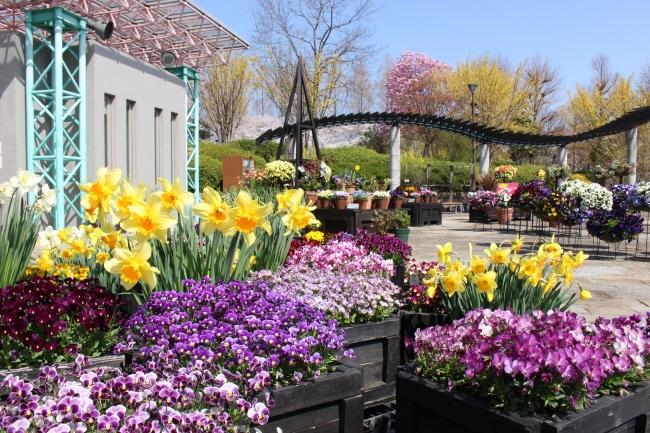 季節の花々が彩るコミュニティ広場(草津市立水生植物公園みずの森)
