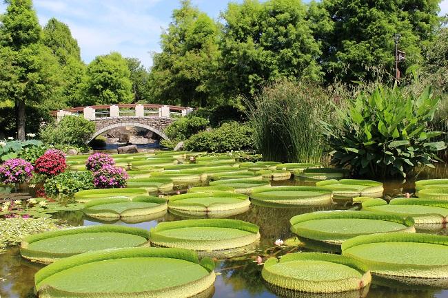 花影の池(8月撮影)