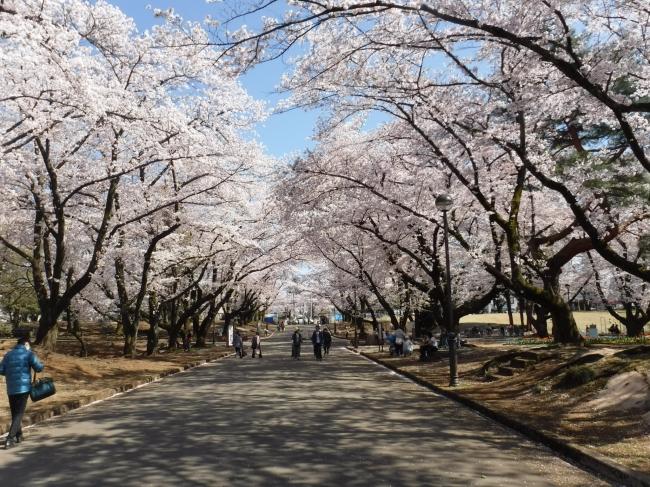 埼玉県営狭山稲荷山公園(春)