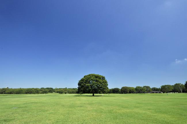 国営昭和記念公園(みんなの原っぱ)