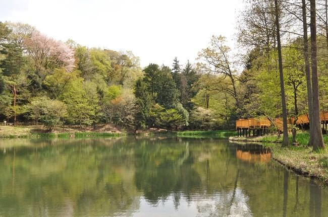 狭山公園内の宅部池