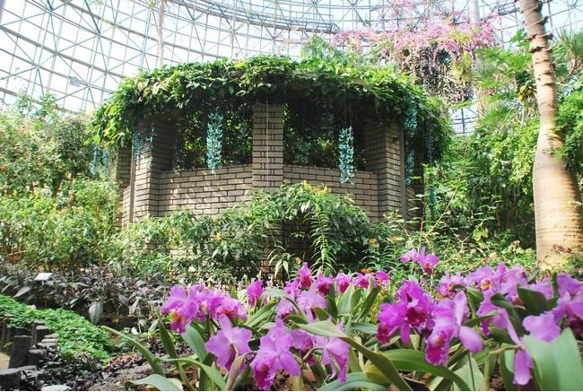 一年中、熱帯植物が楽しめるトロピカルドーム温室(小田原フラワーガーデン)