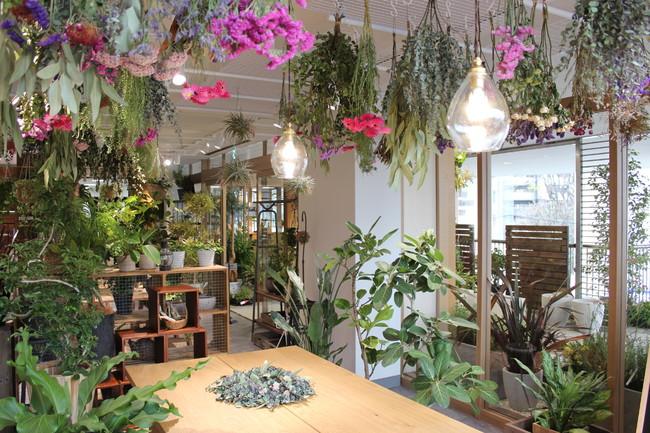 「hale-hana plants+」店舗