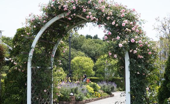 公園の美しい花や緑に囲まれた空間での「お花づくし」の2日間(横浜市アメリカ山公園)