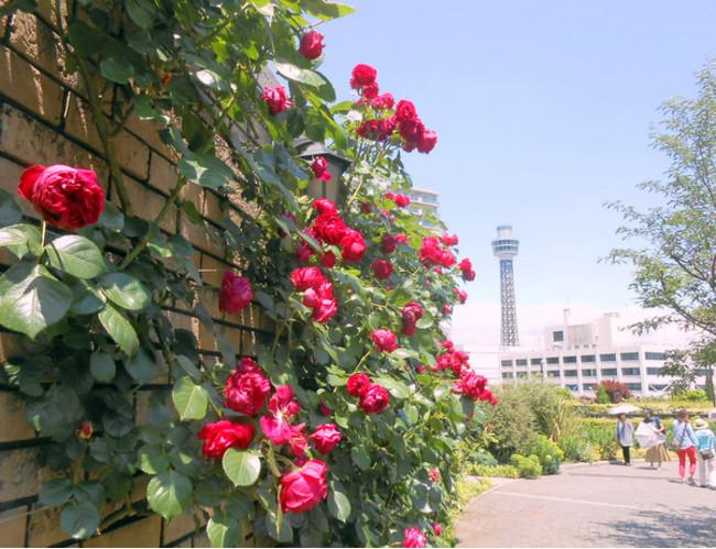 横浜市アメリカ山公園 展望園地