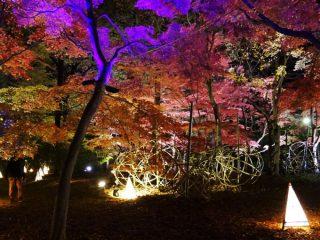 カエデの紅葉と草月流インスタレーション作品