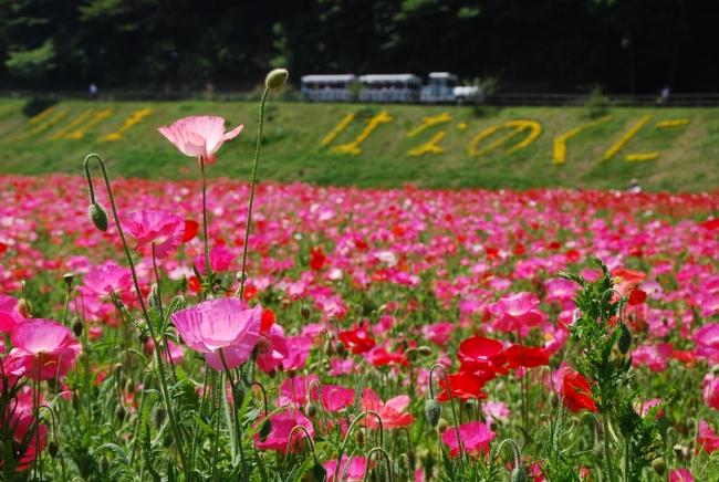 横須賀市くりはま花の国