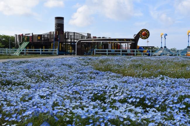 横須賀市長井海の手公園 ソレイユの丘
