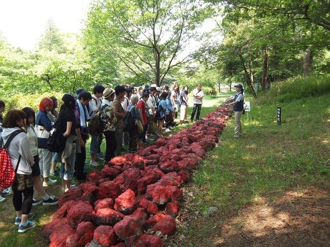 富良野自然塾東京校(国営昭和記念公園内のコースの様子)