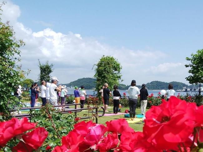 バラに囲まれた芝生広場でヨガイベント開催(過去の様子)