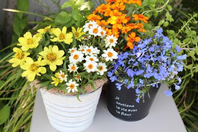 西武緑化管理オリジナル 季節の花の寄せ植え鉢(イメージ)