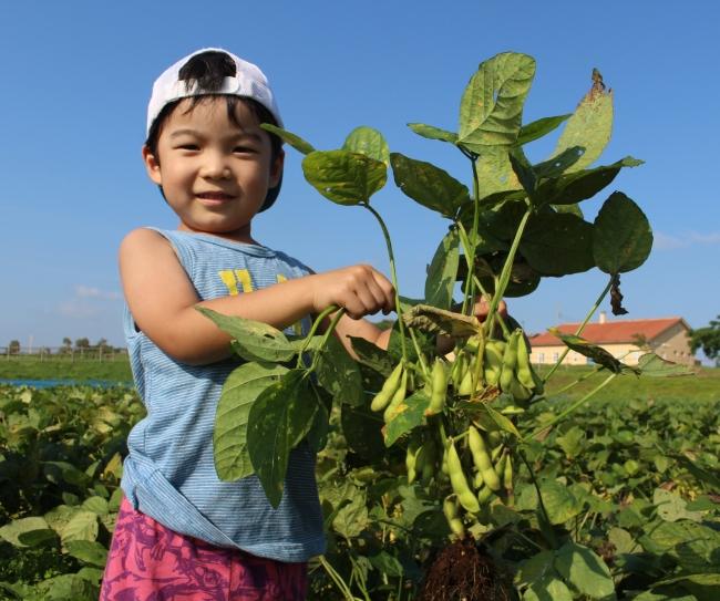 収穫体験(7月はエダマメの収穫体験を予定)