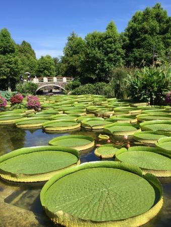 草津市立水生植物公園みずの森 緑の道標「パラグアイオニバス」