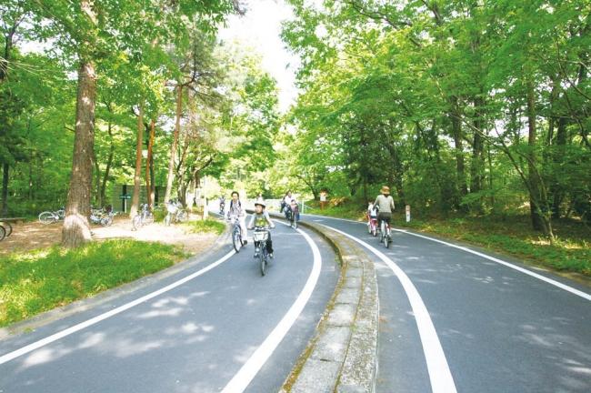 サイクリングコース(国営武蔵丘陵森林公園)