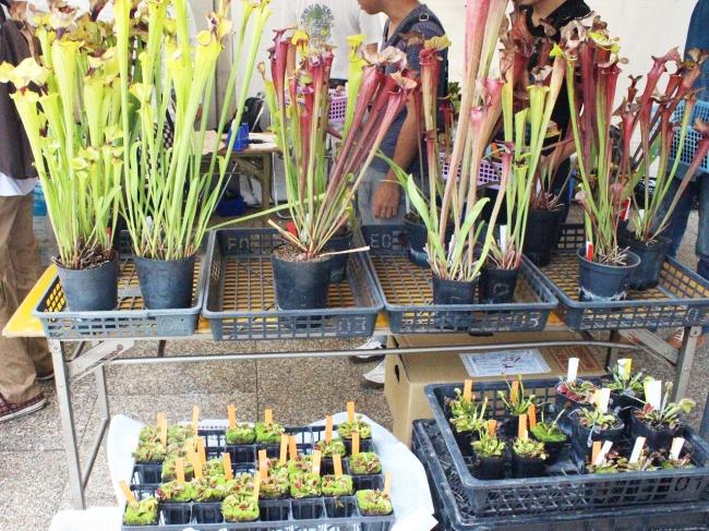 食中植物即売会イメージ(過去開催の様子)
