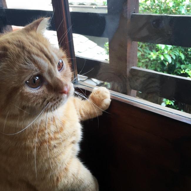 み 白 ゃ ユーチューブ 猫 あこ