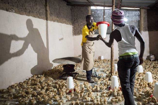 アフリカの若者の失業問題対策において、農業とアグリビジネスは、大変貴重で限りない可能性を秘めています