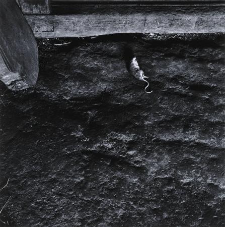 東松照明《熊本・天草下島「家」より》 1959年 島根県立美術館