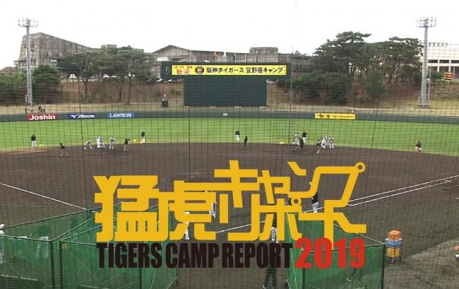 タイガース キャンプ 2021 阪神
