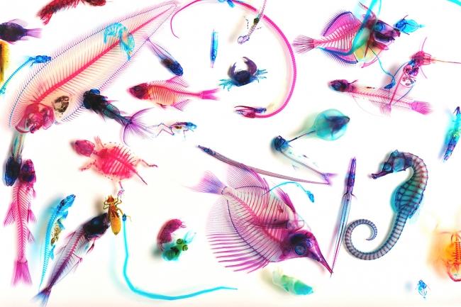 新世界『透明標本』/New World Transparent SpecimensIori Tomita(C)