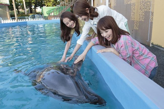 人気の「イルカにタッチ」