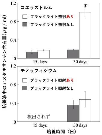図:培養液中の微細藻類コエラストルムとモノフィラジウムのアスタキサンチン含有量