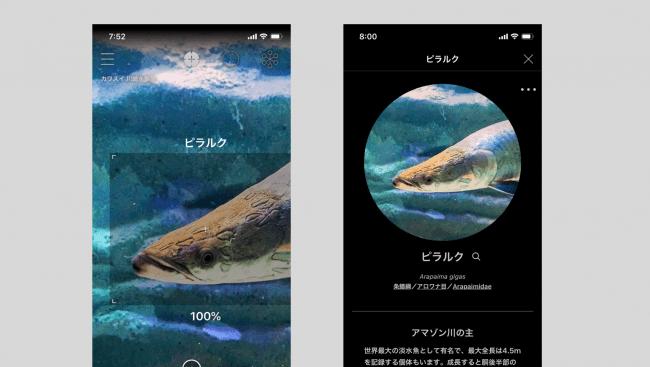 (スマートフォンのLINNE LENS アプリ)