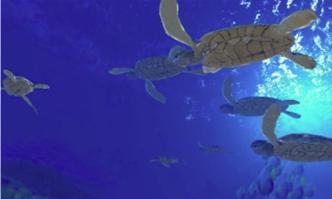 VR映像「Beyond the sea」
