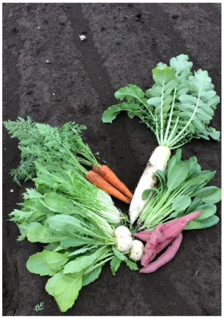 朝採れ野菜画像