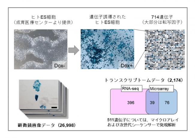 【図1】新たに確立されたバイオリソースおよびデータリソース