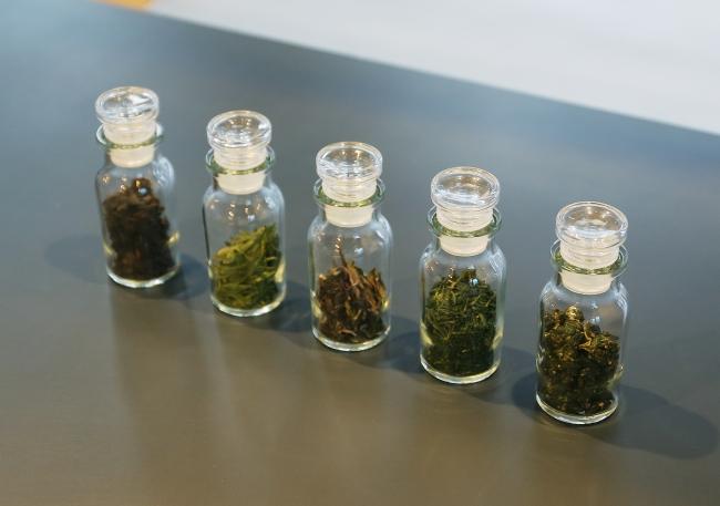 世界の茶葉各種