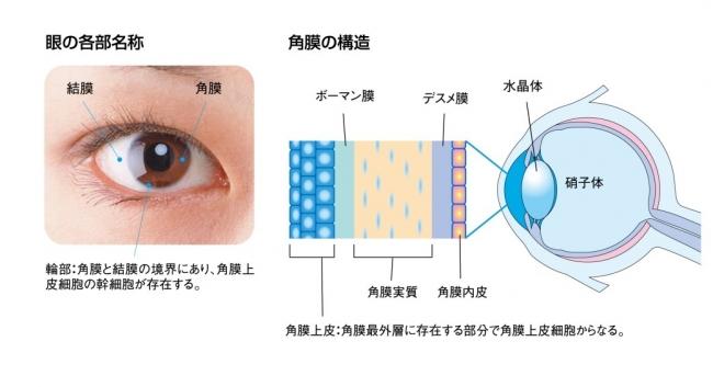 (図2)眼の各部名称