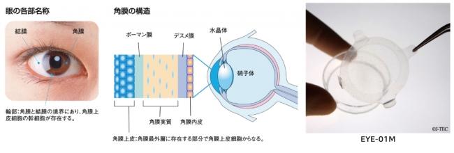 眼の各部名称と角膜構造、EYE-01Mの画像