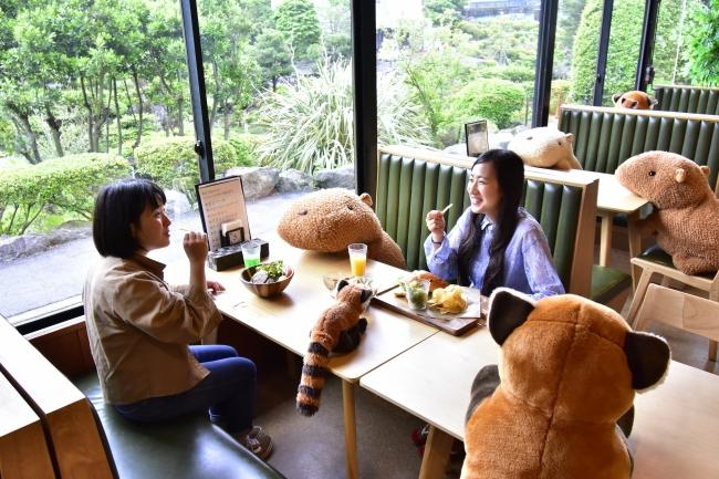 伊豆シャボテン動物公園「森のどうぶつレストランGIBBOTEI」