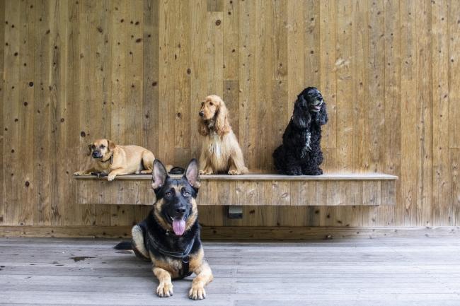 DOGS AT RITAS RANCH